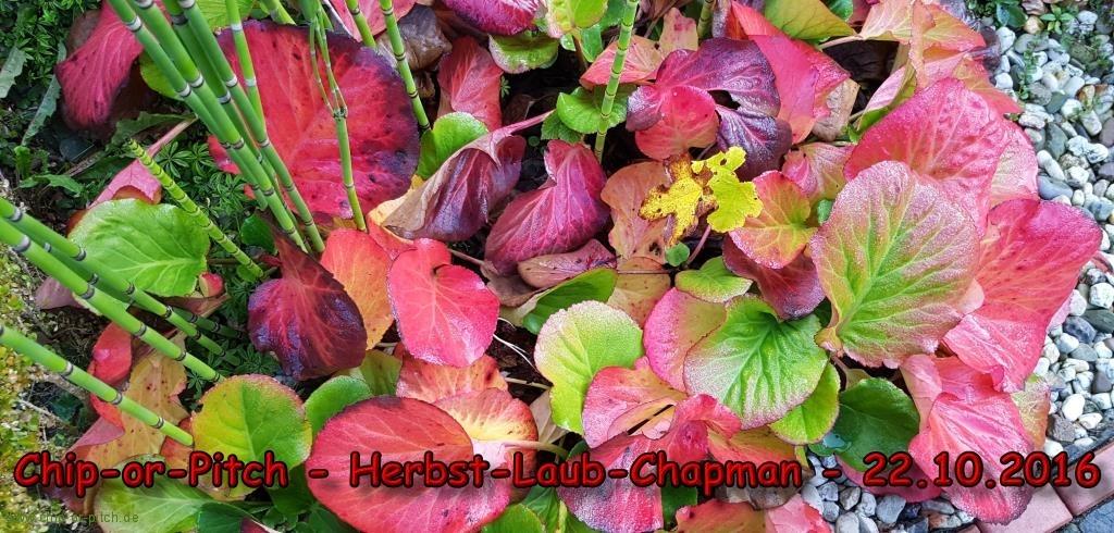 2016-10-22--Herbst-Laub-Chapman-00